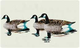 Bacova Mailbox Canadian Geese 10061